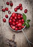 Cranberries on a kitchen table Stock Images