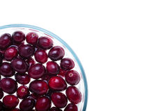 Cranberries, kwartalny widok Fotografia Stock