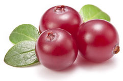 Cranberries with leaves. Royalty Free Stock Photos