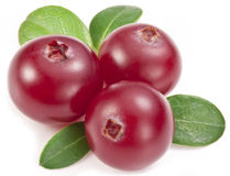 Cranberries with leaves. Royalty Free Stock Image