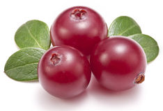 Cranberries with leaves. Stock Photo