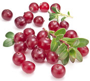 Cranberries with leaves. Royalty Free Stock Images