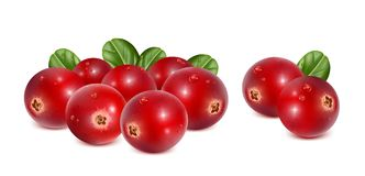 Cranberries with leaves and water drops Stock Photography