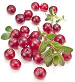 Cranberries with leaves. Royalty Free Stock Photo