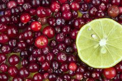 Cranberries and Lemon slice close-up. Stock Photo