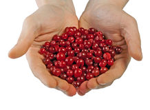 Cranberries in male hands Stock Photos