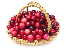 Cranberries med korgen Royaltyfria Bilder