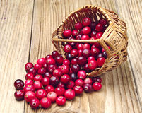 Cranberries near the basket Stock Photography