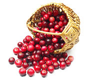 Cranberries near the basket Royalty Free Stock Photography