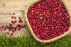 Cranberries on old rustic wooden board. Royalty Free Stock Image