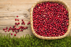 Cranberries on old rustic wooden board. Stock Photos