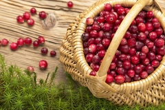 Cranberries on old rustic wooden board and moss. Royalty Free Stock Photography