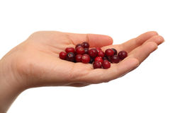Cranberries in palm Stock Image