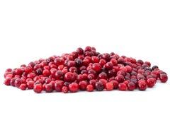 cranberries pile moget Royaltyfria Foton