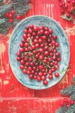 Cranberries on a  plate Stock Images