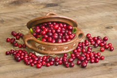 Cranberries in a pot Royalty Free Stock Image