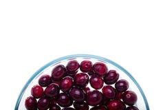 Cranberries, przyrodni okrąg puchar przy dnem rama Zdjęcie Royalty Free