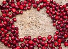 cranberries rama Zdjęcie Stock