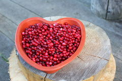 Cranberries. Ripe cranberries from Nordic forests of the Vologda region Royalty Free Stock Photography