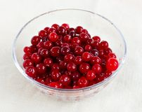Cranberries in a salad-bowl Stock Image