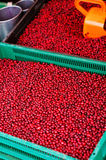 Cranberries on sale at the market Stock Images