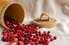 Cranberries scattered on a light background. Royalty Free Stock Image