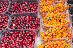 Cranberries and seabuckthorn Royalty Free Stock Photos