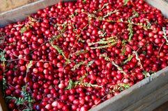 cranberries skrzynka Fotografia Stock