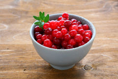 Cranberries in a small bowl Royalty Free Stock Image