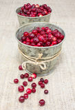 Cranberries in small buckets Royalty Free Stock Image