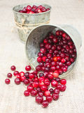 Cranberries in small buckets Royalty Free Stock Images