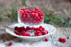 Cranberries and snow on a saucer Stock Photos