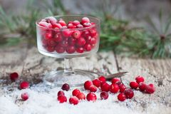 Cranberries and snow on a saucer Royalty Free Stock Photo