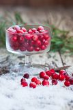 Cranberries and snow on a saucer Royalty Free Stock Photography