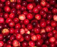 Cranberries som kokar i kruka Royaltyfria Foton