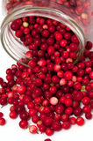 Cranberries spilling from glass jar Royalty Free Stock Photo