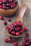 Cranberries in a spoon Royalty Free Stock Images