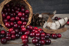 Cranberries still life Royalty Free Stock Images