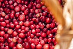 Cranberries w łozinowym koszu, zamykają w górę widoku Obraz Stock