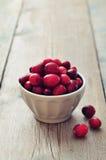 Cranberries w ceramicznym pucharze Fotografia Royalty Free