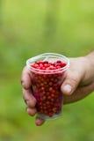Cranberries w szkle na zielonym tle w ręce mężczyzna Obraz Royalty Free