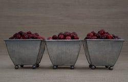 Cranberries w Trzy Footed pucharach Zdjęcie Stock