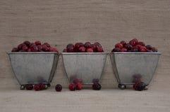 Cranberries w Trzy Footed pucharach z Luźnymi jagodami Obrazy Stock