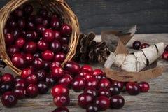 Cranberries wciąż życie Obrazy Royalty Free