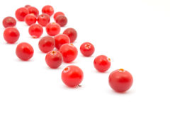 Cranberries on white background. Stock Image