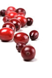 Cranberries on white background - studio shot Stock Photography