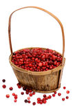 Cranberries in a wooden basket. Isolated on white background Stock Images