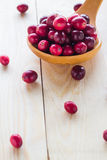 Cranberries wooden spoon background berry Stock Images