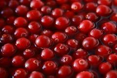 cranberry świeża woda Zdjęcia Stock