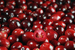 cranberry świeży Obraz Stock